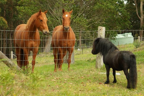 Magnesium for Horses group